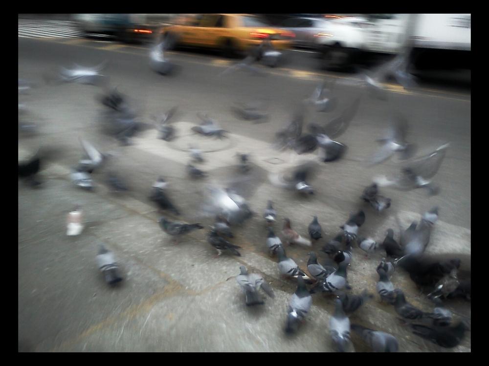 Scram Pigeons