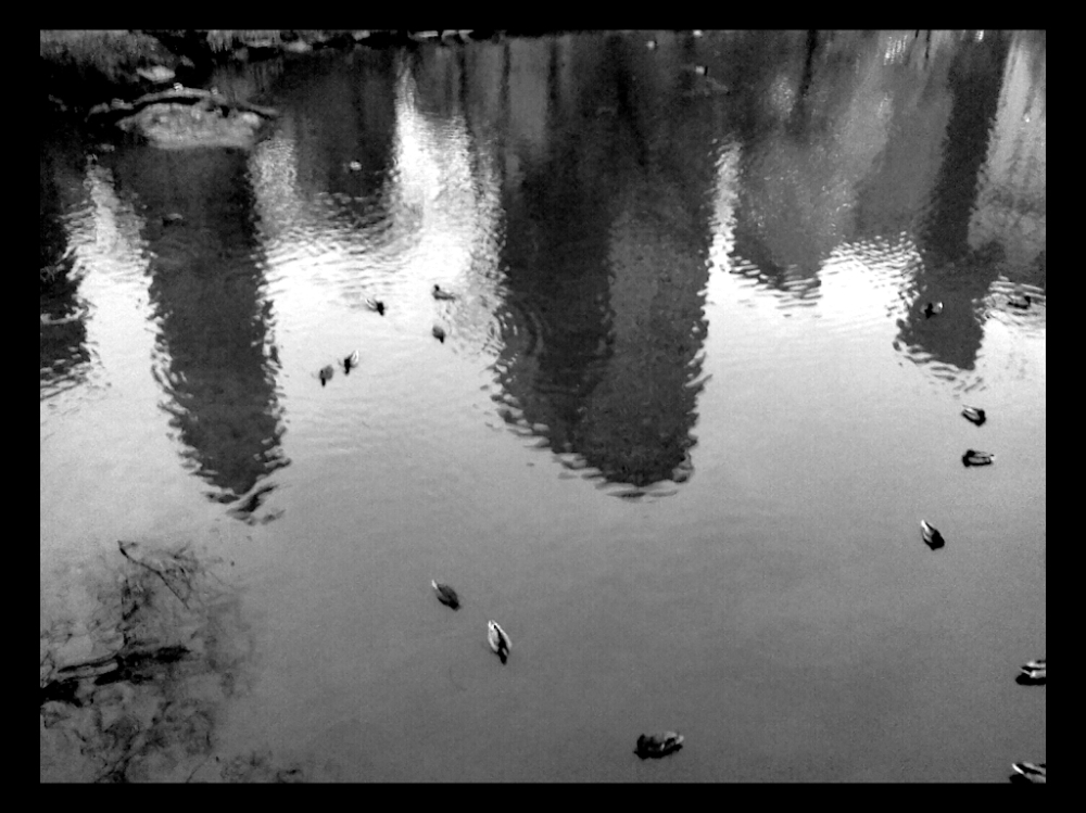 Reflections in a Central Park Pond